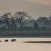 Indian elephants crossing, Kaziranga National Park, Assam, India