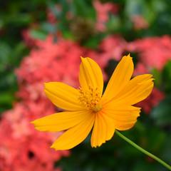 DSC_0583 (Kelson Souza) Tags: flor flores flower jardim jardinagem