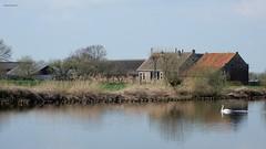 boerderij aan de Vecht nabij Ankeveen (bcbvisser13) Tags: rivier water zwaan boerderij oever vecht stichtsevecht provutrecht nederland eu ankeveen