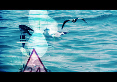 Pushing for Peace... (soniaadammurray - On & Off) Tags: digitalphotography manipulated experimental abstract peace hss birds sea sign flowers blue