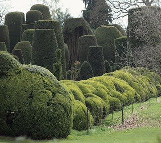 The famous yew trees at Packwood House.