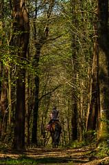Balade dans la foret de Landévennec (nolyaphotographies) Tags: crozon landevennec finistere bretagne france europe nikon d7000 monde bois foret wood arbre free cheval horse vert green rando walking gr