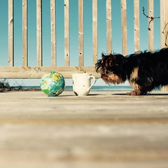 ball, cup, Belle (sonyacita) Tags: utata:project=ip251