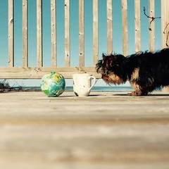 ball, cup, Belle (sonyacita) Tags: utata:project=ip251