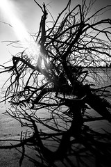 (willy vecchiato) Tags: blackandwhite monochrome beach sea tree shadows shadow man woman people candid abstract abstraction fine art mistery minimalist minimal 2017 fuji x100s street trapped
