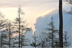 Wolkenschauspiel (mayflower31) Tags: himmel sky wolken clouds gesicht face bäume trees
