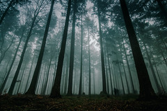 It haunts me.., (stray_light_rays) Tags: ghost paranormal scenery scenics dark moody mood atmosphere atmospheric woods forest woodland trees evening fog foggy misty mist