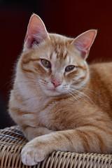 Harry :) <3 (eddcellentcats) Tags: cat cats kitty kittycat nikon d750 sigma sigmalens
