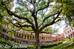 20170423_14173301_HDR.jpg (Les_Stockton) Tags: frenchquarter hdrefex highdynamicrange neworleans hdr tree vacation louisiana unitedstates us