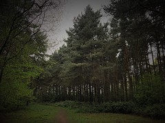 The path goes on (andystones64) Tags: lincolnshire nlincs woodland pathway trees reserve nature messingham