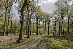 Bannams Woods 18th April 2017 (boddle (Steve Hart)) Tags: steve hart boddle steven bruce wyke road wyken coventry united kingdon england great britain canon 5d mk4 6d 100400mm is usm ii 2470mm standard 815mm fisheyes lens 1635mm l wideangle wide angle 100mm prime macro laowa 15mm f4 11 wild wilds wildlife life nature natural bird birds flowers flower fungii fungus insect insects spiders butterfly moth butterflies moths creepy crawley winter spring summer autumn seasons