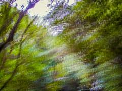 Nature blur (hmxhm) Tags: aotearoa nature newzealand olympus wellington zealandia