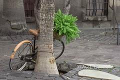 Amarrada 2.0 (txamo110) Tags: canarias gran las palmas bicicleta palmera