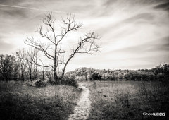 Wilderness Of Burning Sand (Ghost Of Nations Photography And Digital Art) Tags: ghostofnationsphotography ghostofnations dunes dune dunesnationallakeshore lakemichigan lakeshore blackandwhite bw trail wilderness nationalpark