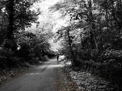 Northumbria, 2015. (petebond_au) Tags: dappledlight lightandshadows beautifulcountryside orange blackandwhite countrylanes deciduoustrees summer unitedkingdom englishcountryside northernengland northumbriancountryside northumbria hadrianswallwalk olympuscamera olympusxz2