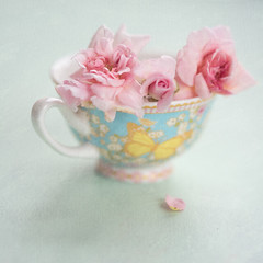 roses (borealnz) Tags: pink roses cup pretty sweetheartroses cecilebrunner flowers