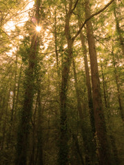 Woods / Forêt (DouxVide) Tags: france gx8 mft m43 pau sudouest aquitaine nouvelleaquitaine pyrenees bearn nature foret forest woods wald green spring atmosphere light dark shadow rays trees sunstars sun sunbursts daytime
