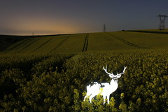 Bright Lights (JamesStreeterphotography) Tags: longexposure nightphotography blue light red england lightpainting west green yellow night dark painting photography graffiti sussex stencil long exposure stag glow westsussex deer lp lightgraffiti lightstencil