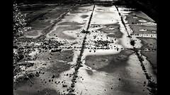 Harrobitik (Igorza76) Tags: bw naturaleza white black blanco nature stone country negro natura bn zb zuri bizkaia basque quarry euskadi cantera piedra euskal herria harria beltz urdaibai arteaga blackwhitephotos ereo kantera harrobia gauteagiz andrabide andrabideko harrobiak