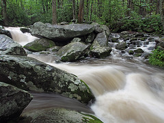 IMGPG15627 - Great Smoky Mountains National Park (David L. Black) Tags: nationalparks greatsmokymountainsnationalpark