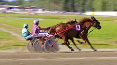 _MG_5288 (asad_malik) Tags: horse festival race suomi finland photography july national cart malik 27 kuopio hevonen asad 2013 kuninkuusravit sorsasalo