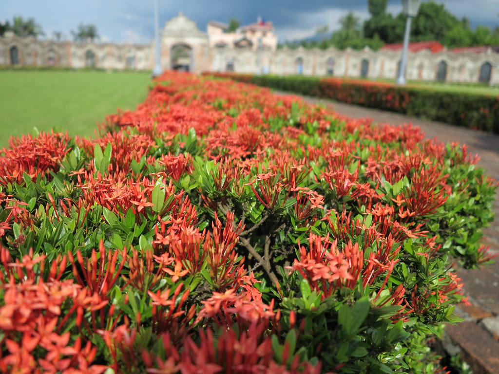 The world 39 s best photos of flower and santan flickr hive for Philippine garden plants