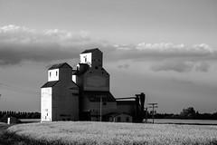 Classic Prairie (TigerPal) Tags: abandoned evening blackwhite nikon elevator sk prairie saskatchewan plains goldenhour sask d700 leney