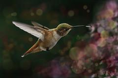 Mmmm Mmmmm Good .......... (P C Chang) Tags: red summer orange green bird beautiful tongue canon garden