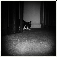 (266/366) Target Acquired... (Cathy G) Tags: bw home night cat eyes glow oxford squareformat stalking prowl iphone catseyes smodge 366 iphone5 266366 iphoneography oggl