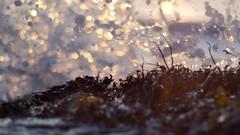 A Second Splash of Gold (Amble180) Tags: wild panasonic northumberland about g3 minoltarokkor50mmf17