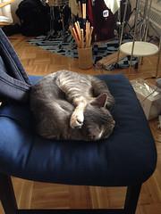 IMG_0608 (Going Bananas!) Tags: sleeping cute cat weird kitten pussy sleepy unusual paws awkward pussycat cutecat bestfriends cutekitten sleepycat weirdcat