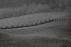 Panzersperre - Gelndepanzerhindernis der Sperre Marfeldingen aus dem zweiten Weltkrieg im Tal der S.aane bei Marfeldingen im Kanton Bern in der Schweiz (chrchr_75) Tags: world fog schweiz switzerland war nebel suisse suiza swiss guerra sua second mundial christoph dezember svizzera nebbia wereld guerre niebla brouillard andra sveits segunda zweiter seconde sviss oorlog zwitserland tweede sveitsi anden weltkrieg suissa mondiale sperre chrigu wojna szwajcaria neblig seconda verdenskrig 1312  2013 druga toinen kantonbern  wiatowa chrchr hurni chrchr75 maailmansota nebeltag chriguhurni vrldskriget chriguhurnibluemailch dezember2013 sperrstelle sperremarfeldingen sperrstellemarfeldingen marfeldingen albumnebelinderschweiz