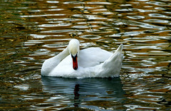 The Ugly Duckling !! (Vafa Nematzadeh Photography) Tags: