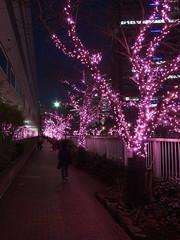 Meguro River Christmas Illuminations (*_*) Tags: christmas city pink winter light tree japan night river dark lights tokyo asia december illuminations twinkle ping meguro kanto gawa 2013