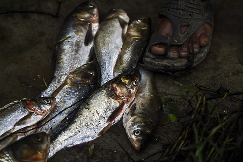 Captured fish in Khulna, Bangladesh. Photo by Felix Clay/Duckrabbit.