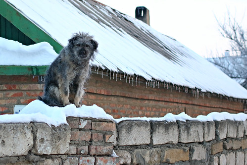 Frosty morning - dog on the fence