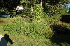 """Edible Landscape <a style=""""margin-left:10px; font-size:0.8em;"""" href=""""http://www.flickr.com/photos/91915217@N00/12450336353/"""" target=""""_blank"""">@flickr</a>"""
