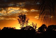 Februaury 15th Sunrise (Jim Mullhaupt) Tags: morning orange sun tree silhouette night clouds sunrise dawn florida bradenton mullhaupt jimmullhaupt