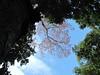 canopywalkway-leonmoore-022