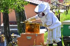 Apicoltura - Canton Ticino (Photo by Lele) Tags: ticino bio svizzera miele api apicoltura oggio valcolla