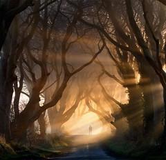 Темные изгороди, Северная Ирландия