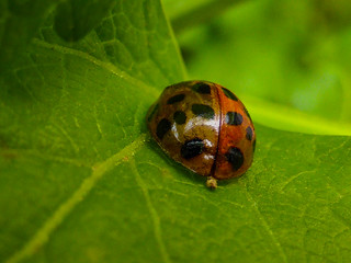 Do Ladybirds Shit in the Woods?