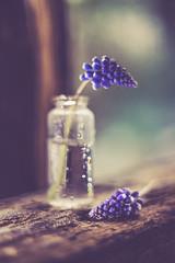 Muscaris (RoCafe on/off) Tags: pentacon stilllife muscaris flowers bottle wood blue bokeh water pentacon50mmf18 nikond600 vintagelens m42 closeup