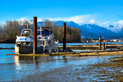 Barnston Island - Surrey, BC (SonjaPetersonPh♡tography) Tags: barnstonisland island katziefirstnation indianreserve fraserriver river water nikond5200 nikon afsdxnikkor18300mmf3563gedvr blueskies sky landscape boats surrey vessel mountains bccoastmountains snowcappedmountains riverbank trees dock wharf sand waterfront waterscape seascape