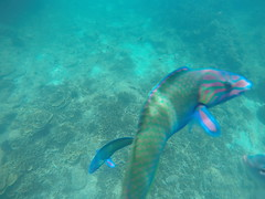 Fish seen on Snorkelling Trip (Paul_Jean) Tags: andamansea snorkelling aonang krabi thailand
