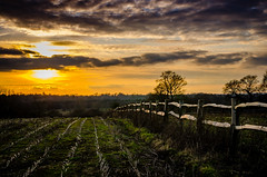 "Three Fords Field Sunset (Stephen Reed. ""Over 1 Million Views Thanks"") Tags: sunset surrey send lightroomcc nikon d7000 england winter naturesfinest"