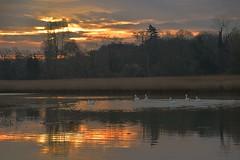 River Deben, just after Sunrise at Wilford Bridge, Melton Suffolk. 04 04 2017 (pnb511) Tags: suffolk rurallandscape river deben tidal mud water sun sunrise east anglia reflections swans
