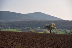 Par un matin de printemps (Excalibur67) Tags: nikon d750 sigma 70200f28apoexdgoshsm paysage landscape arbres trees printemps spring frühling mountain montagne vosgesdunord nature