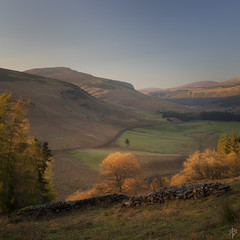 Luggala Valley... (fearghal breathnach) Tags: luggala squareformat goldenhour landscape lonetree golden valley wicklowmountains