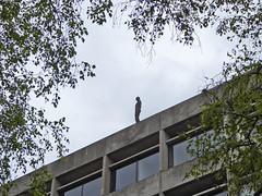 Antony Gormley Sculpture, UEA Library roof, Norwich, Norfolk (mira66) Tags: statue gormley uea library roof university norwich norfolk uk eastanglia sculpture